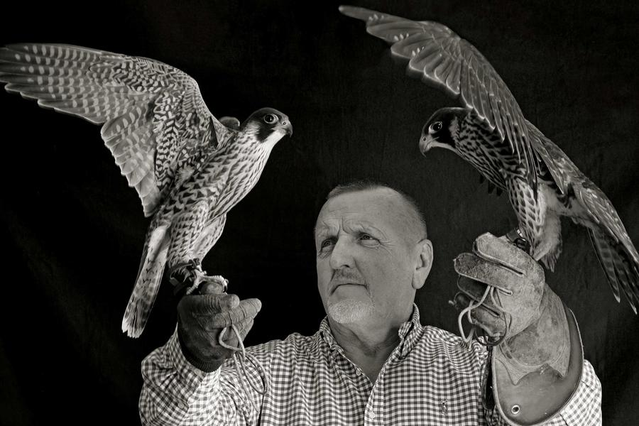 The Amazing Life Of The Man Who Breeds Falcons For Gulf Royals