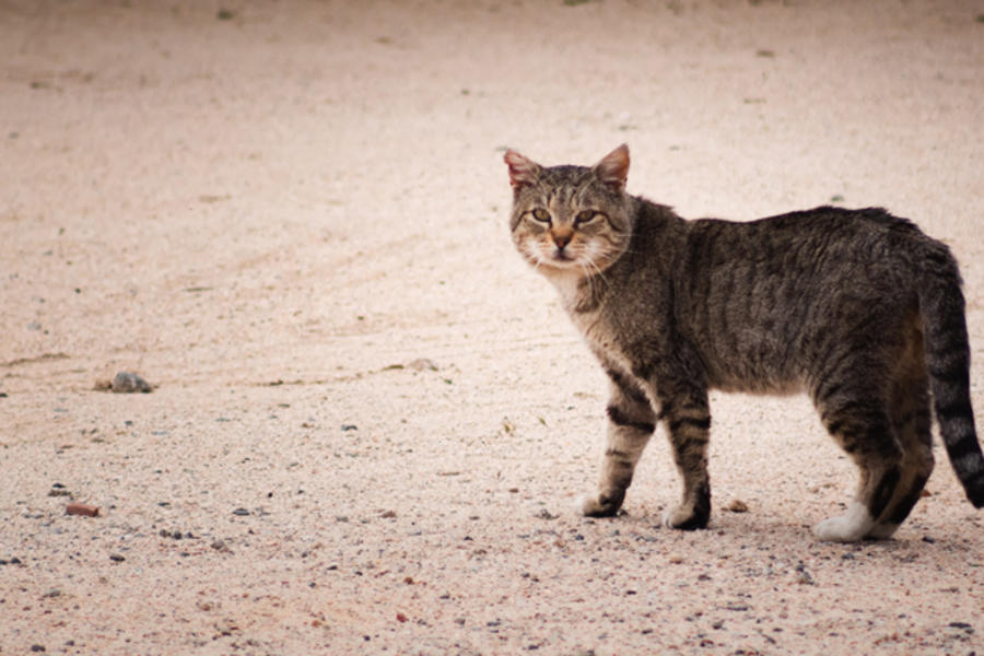 You Could Be Fined 500AED If You Feed Stray Cats In Dubai