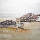 Emirati Painter's Prolific Work Combines Love of Art And Nature